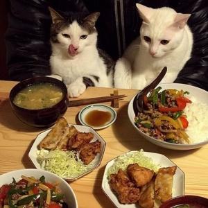 Коты, кошки, котята на аву